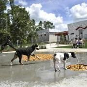 Luxury Resort for VIPS (Very Important Pets) Open at Disney World