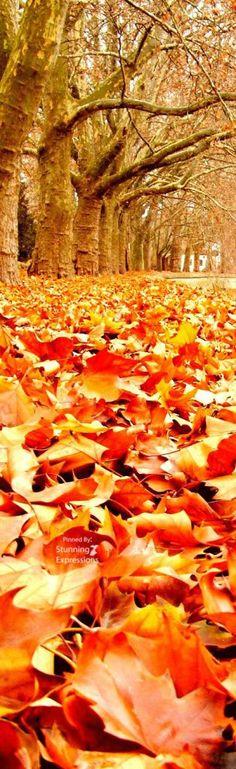Beautiful Fall Leaves !!