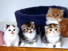Quando i gatti sono nuvolosi