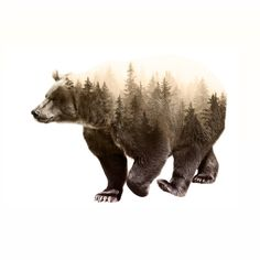 In It's Element - Brown Bear Double Exposure Art Print Art Print