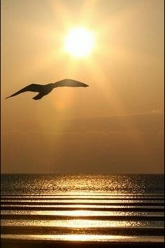 Beautiful sunrise over the ocean with a silhouetted sea gull. Beautiful World, Beautiful Places, Beautiful Pictures, Beautiful Sunrise, Ciel, Belle Photo, Cool Photos, Scenery, Around The Worlds