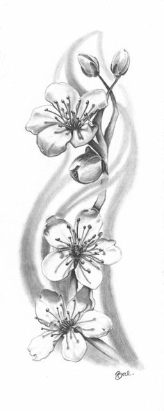 Black and white cherry  blossum sketch