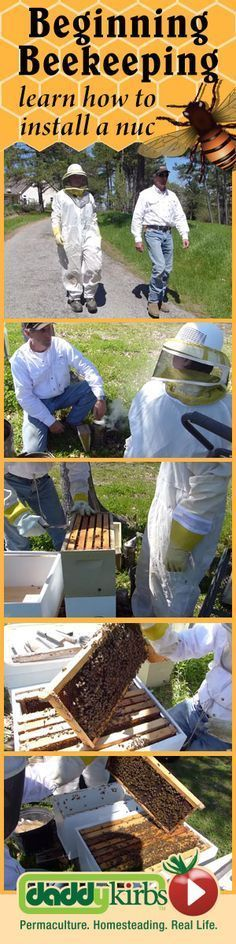 When my son (15) got his first bees, we spent a few hours with an experienced #beekeeper. He showed us around and took the time to show how to properly install the nuc hive. #beekeepingbusiness