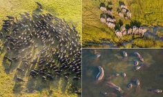 British photographer Peter Adams captures wildlife shots above the Okavango Delta