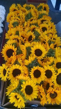 Jars of sunflowers.  Sure can brighten up a room!