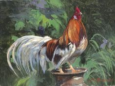 Red And White Rooster by N. Mirkovich