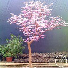 9a15d396a1 8 melhores imagens de árvore bonsai em 2018 | Troncos, Arte no ...