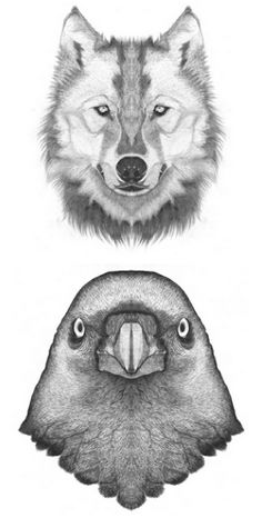 Bird & Wolf Drawing - #birdtattoo #wolf tattoo