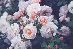 flower tumblr - Buscar con Google