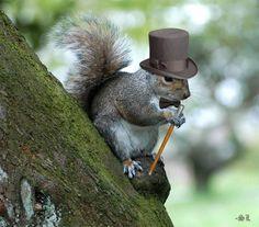 Squirrels Wearing Hats | How to make a squirrel wear a necktie: