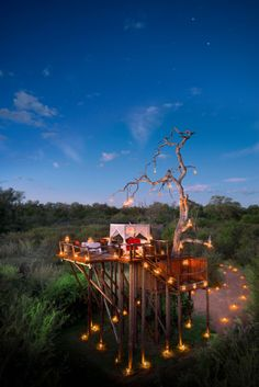 Tree Huts on the Lion Sands Game Reserve in South Africa   Thrillist