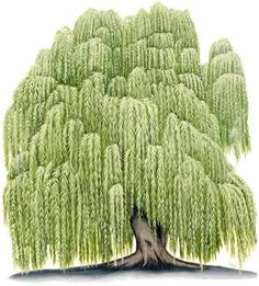 Willow tree: Feminine	The Witches' Moon;