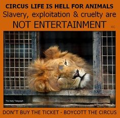 Torture for your entertainment; please help stop the ring of violence for these wonderful animals. If you only knew what miserable lives they live you wouldn't dream of taking your children or grandchildren to be a part of it. Remember, we can make a difference by not paying to see this.