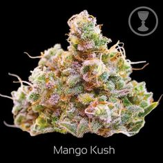 Mango Kush Our staff is devoted to the consistent selection of unique and rare genetics and the overall quality, you would definitely get your money's worth at weed for sale Props visit our site at https://www.weedonlinesupplier.com/ or call +1 775 499 8657