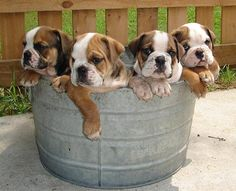 Rub a Dub Dub, Baby Bullies in a Tub