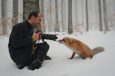 A photographer met a fox.