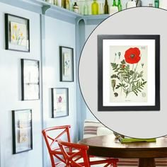 Group unmatted botanicals pressed between glass for a garden-fresh display. Print this red poppy and others for free at botanicus.org.    Floating frame, $10; joann.com