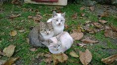 Nido gatti   www.borgosanmartino.eu