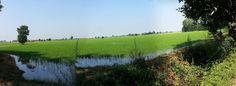 I campi del nostro riso nel Parco Agricolo Sud Milano http://www.parc-mi.it/contenuto/materie-prime