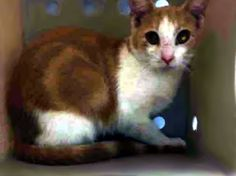 rees. **Treatable dermatitis and GONE! Killed by NYCACC!