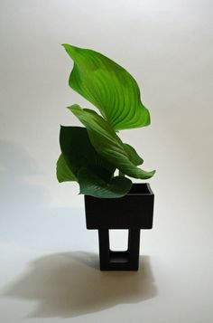 Ikebana using only hosta leaves