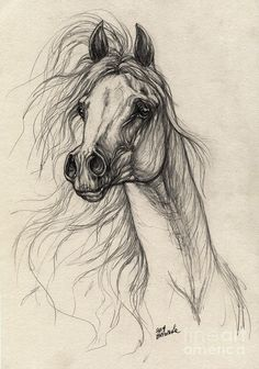 Arabian Horse Drawing 37 Drawing - Arabian Horse Drawing 37 Fine Art Print