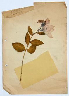 stremplerart: W. Strempler 2014 | flora, dried plants, colors, collage