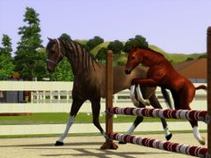 Sims 3 Foals foal crop 2013 | SHOWS ENTERED