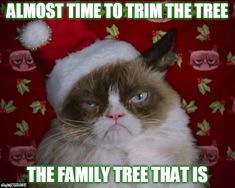 Time To Trim The Family Tree   ALMOST TIME TO TRIM THE TREE THE FAMILY TREE THAT IS   image tagged in grumpy cat christmas,christmas,christmas tree,trim the tree,is that a clue on the tree   made w/ Imgflip meme maker