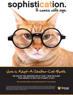 Sample: The Animal Foundation's Adopt-A-Shelter-Cat Month Promo Ad. http://www.animalsheltering.org/resources/sample/sample-the-animal-foundations-adopt-a-shelter-cat-month-promo-ad.html