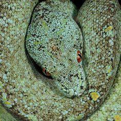 biggest snake ever giant snake found anaconda python