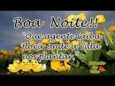 FALANDO DE VIDA!!: Boa noite meus amigos - Video de Boa Noite - Vídeo...