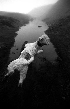 Fine Art Photography Gallery - Paul Williams - Tilly The Flying Dog.