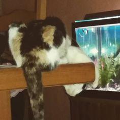 #crazycat #mylove #cat miaou  by natelectric http://www.australiaunwrapped.com/