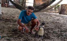 """Em uma ilha brasileira, um viajante dos mares parece ter encontrado sua """"alma gêmea"""". Aparentemente, é esta a ligação entre este pinguim de Magalhães e o aposentado João Pereira de Souz…"""