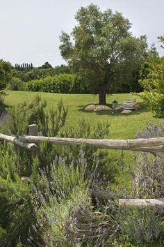 Beautiful Mediterranean Garden