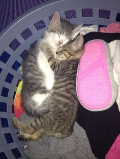 Two exceptionally cute kittens asleep in the laundry basket