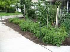Permaculture Values. How your values effect your garden!