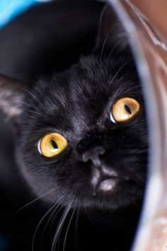 Black cat Anna Marinenko Looks like my Blackie. Beautiful Cats, Animals Beautiful, Cute Animals, I Love Cats, Cool Cats, Photo Chat, Lazy Cat, Cat Boarding, Tier Fotos