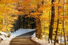 When it comes to fall foliage in VT, country roads provide the perfect mix of charm and scenery. These towns have great country roads to see it all. New England Fall, New England Travel, Need A Vacation, Vacation Ideas, Honeymoon Ideas, Vacation Spots, Valley Of Fire, Autumn Photography, Cool Countries