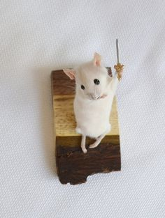 Taxidermy mouse with sword.