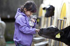 Friends! #kids #cows