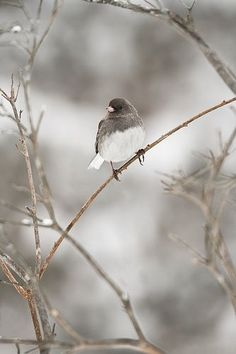 Country Winter / Bird in branches