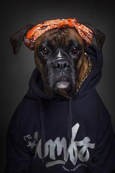 Photographer dresses dogs up in human clothing based on their personalities | Metro News