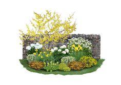 """In strahlenden Gelb- und Weißtönen präsentiert sich die Beetkombination """"Goldmarie"""". Die filigranen gelben Blüten der Zaubernuss läuten bereits zu Beginn des Jahres den Duftreigen ein und wecken damit ihre Begleiter im Beet. Während..."""