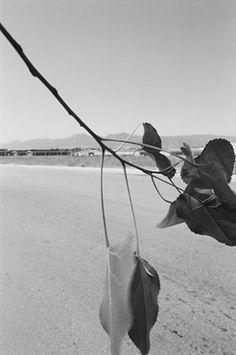 Robert Adams | The Place We Live | Yale University Art Gallery - Niwot, Colorado, 1988