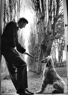 Givenchy with his Afghan hound, 1955.