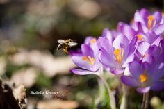 haiku - eine annäherung: bee little bee