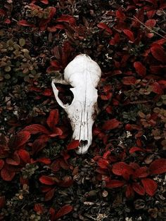 Amazing colors love the skull Nature is God Vanitas, Carole Martinez, Olgierd Von Everec, Sublime Creature, Kreative Portraits, The Ancient Magus Bride, Yennefer Of Vengerberg, Aradia, Photo Libre
