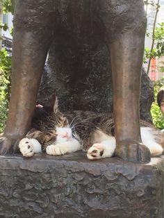 東京・渋谷にあるハチ公像の足元でお昼寝をする猫。 Cat to take a nap at the foot of the statue of the dog in Shibuya, Tokyo. - twitter@casuzu222